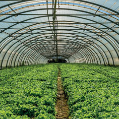 High-quality Greenhouse Films & Products